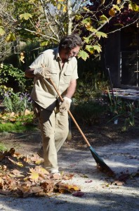 Bob raking up leaves in the autumn
