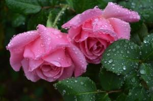 raindrops on roses, whiskers on kittens!