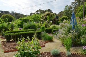 the vegie and herb garden in spring
