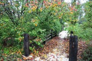 wet wood in autumn